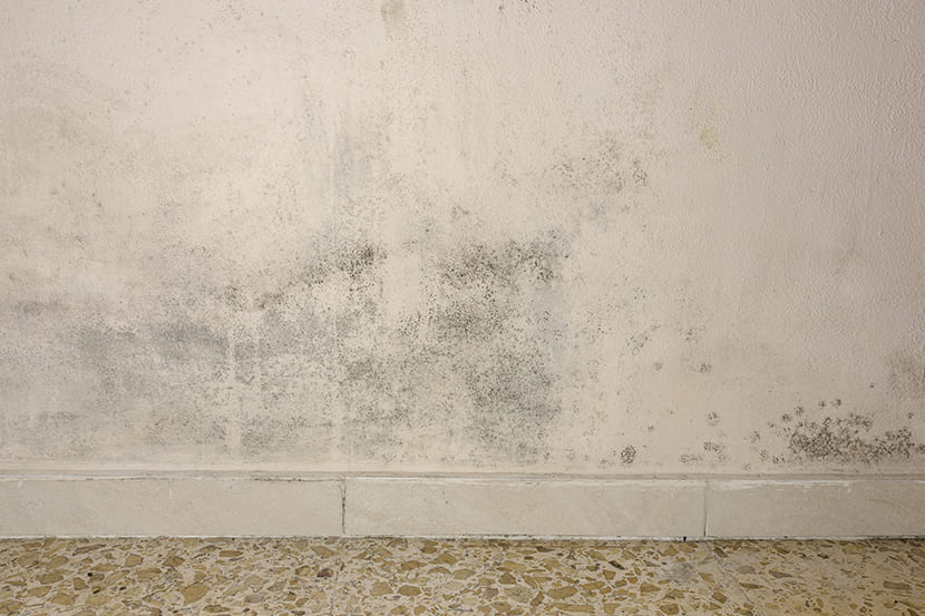 Schimmel en vochtplekken op de muur