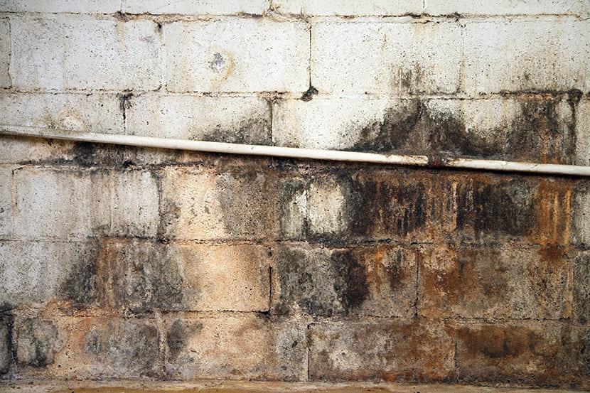 Schimmel op de muren in de kelder