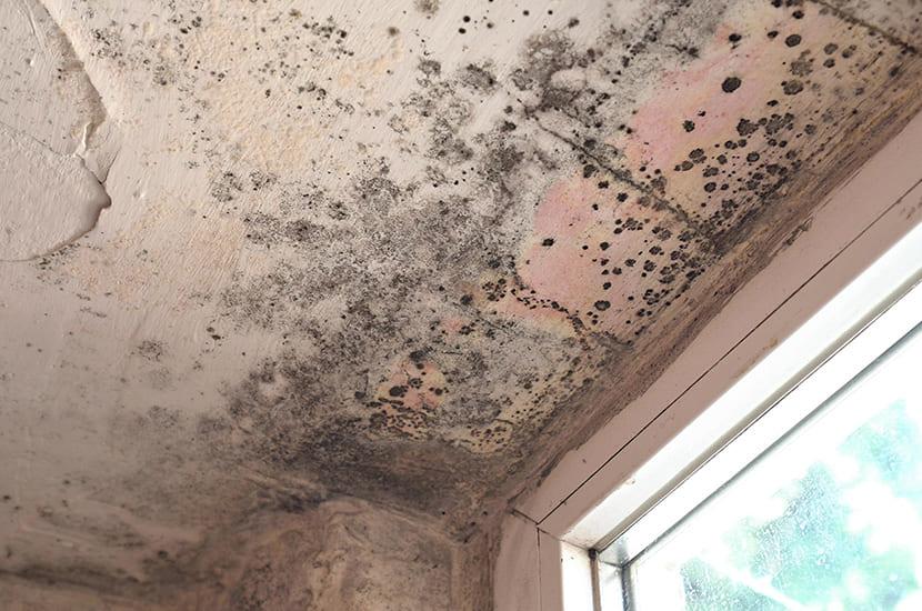 Schimmel op het plafond en de muur