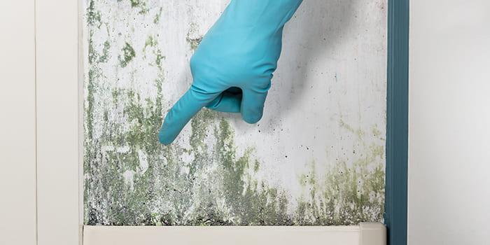 Blog - Hoe kun je schimmel op de muur bestrijden?