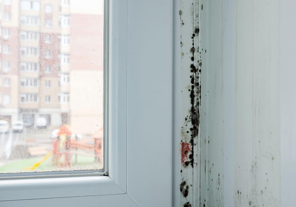 Zwarte schimmel bij de ramen van de slaapkamer