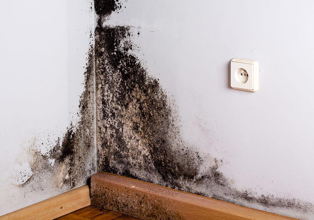 Zwarte schimmel op de muur van de slaapkamer