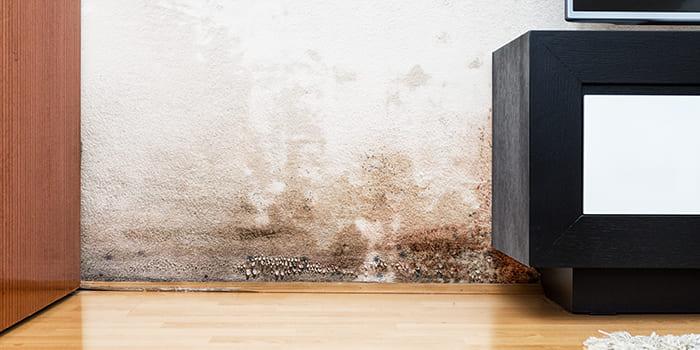 Blog - Natte muren in huis?