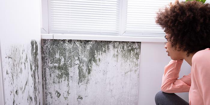 Blog | Zwarte schimmel op de muur