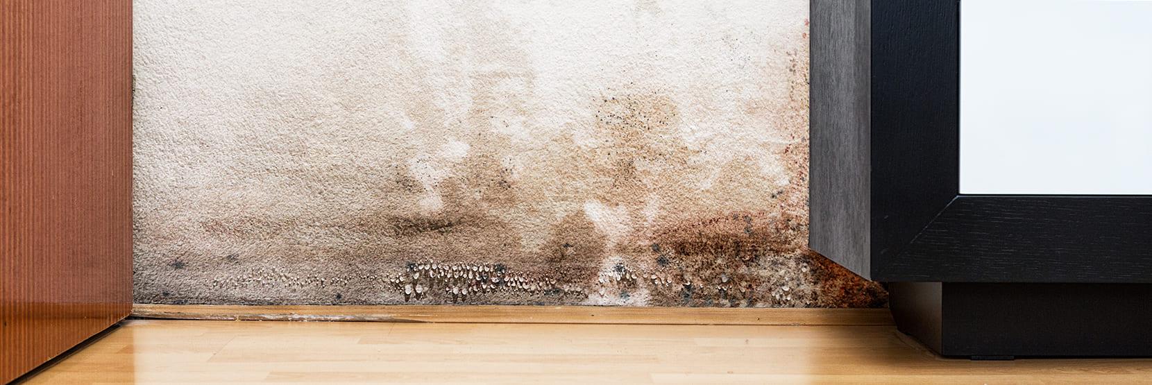 Natte muren in huis?