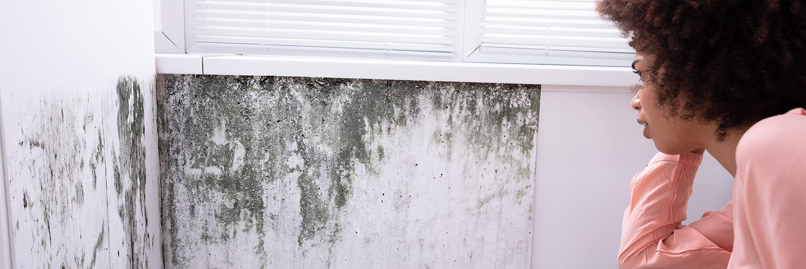 Zwarte schimmel op de muur? Hoe kun je dit voorkomen?