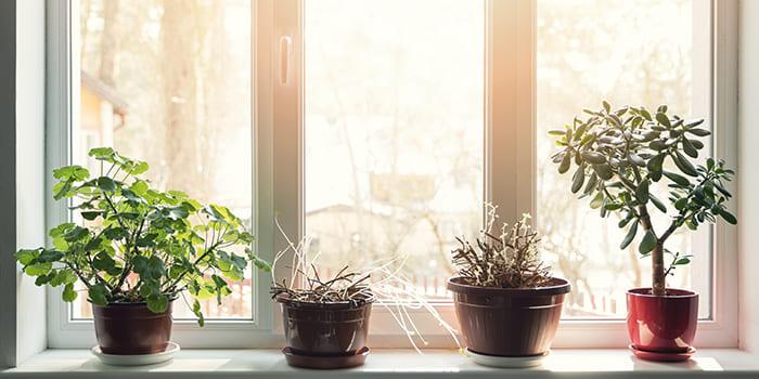 Blog - Planten tegen vocht in huis?