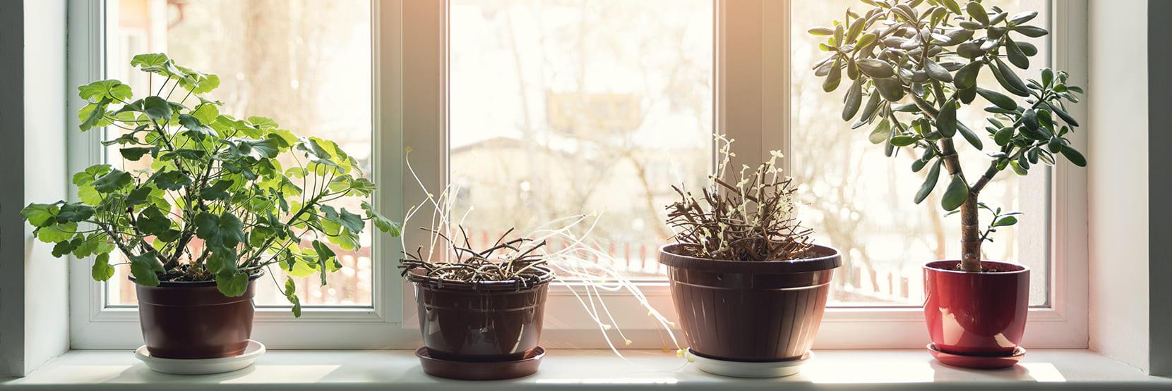 Planten tegen vocht in huis?