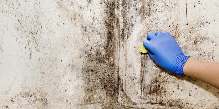 Blog - Zwarte schimmel verwijderen op de muur