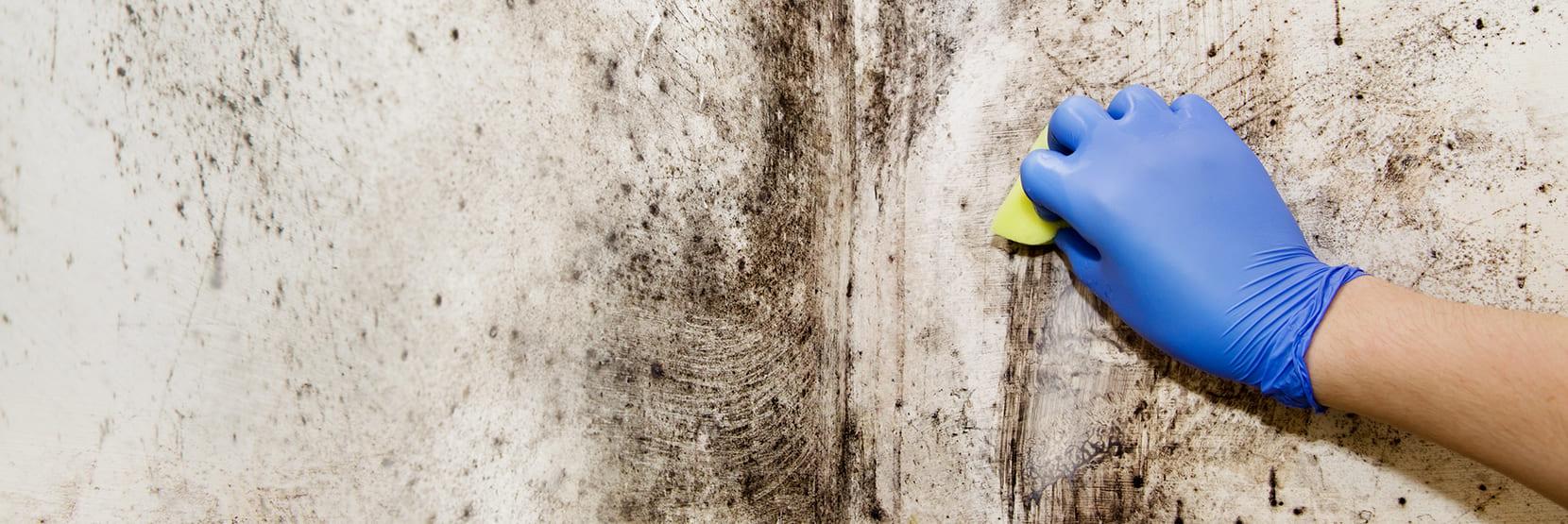 Zwarte schimmel verwijderen op de muur