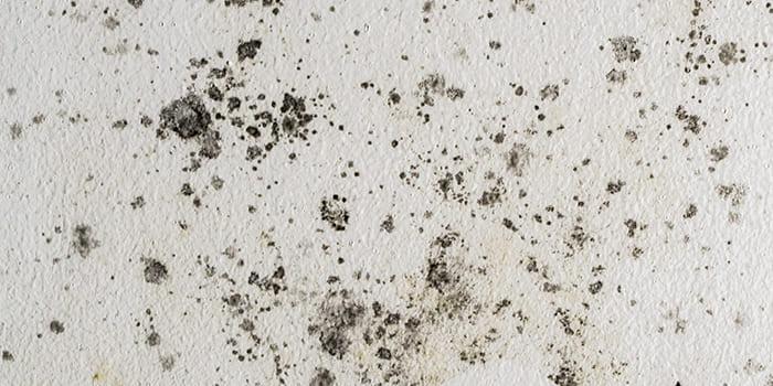 Blog - Spocht in de muur